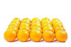 Grupo de naranja Fotografía de archivo