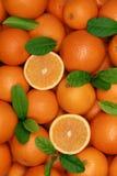 Grupo de naranjas recientemente escogidas con las hojas Imagen de archivo