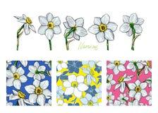 Grupo de narciso das flores com três testes padrões sem emenda diferentes Imagem de Stock
