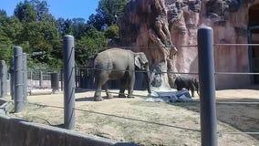 Grupo de niños del elefante que juegan alrededor de su madre en un parque zoológico almacen de video