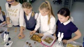 Grupo de niños que hacen experimentos en clase de Biología Educación, niños, ciencia y concepto almacen de metraje de vídeo