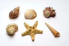 Grupo de objetos do oceano Imagens de Stock