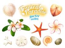 Grupo de objetos tropicais da natureza: os shell do mar, plumeria florescem o dólar de areia do frangipani, a estrela do mar e se Imagem de Stock Royalty Free