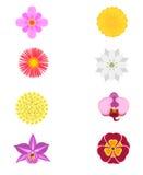 Grupo de oito flores Fotos de Stock Royalty Free
