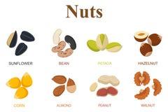 Grupo de oito tipos diferentes nuts em um fundo branco Imagem de Stock Royalty Free