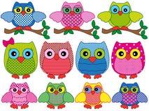 Grupo de onze corujas decorativas dos desenhos animados Imagens de Stock