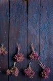 Grupo de oréganos secos Imagens de Stock