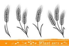 Grupo de orelhas do trigo ilustração stock