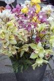 Grupo de orquídeas do barco do Cymbidium na flor, na cor cor-de-rosa e amarela da luz - fotografia de stock royalty free