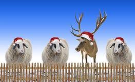 Grupo de ovejas y de reno con el sombrero de Nicholas al aire libre, detrás de w Fotografía de archivo