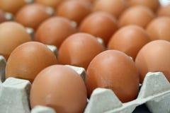 Grupo de ovos frescos na bandeja do pater Imagens de Stock Royalty Free