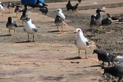 grupo de pájaros Imágenes de archivo libres de regalías