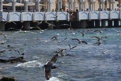 grupo de pájaros Imagen de archivo