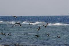 grupo de pájaros Imagenes de archivo