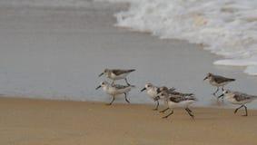 Grupo de pájaros de orilla Imagen de archivo libre de regalías