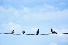 Grupo de pájaros en el alambre Imagenes de archivo
