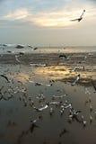 Grupo de pájaros que vuelan en la oscuridad Imágenes de archivo libres de regalías