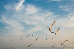 Grupo de pájaros que vuelan en la puesta del sol Imagen de archivo