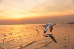 Grupo de pájaros que vuelan en la puesta del sol Foto de archivo libre de regalías