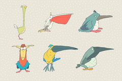 Grupo de pássaro bonito dos desenhos animados isolado no fundo branco Ilustração do animal do vetor Foto de Stock