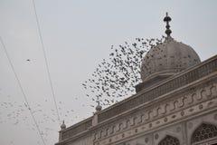 grupo de pássaros Foto de Stock