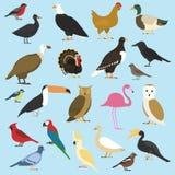 Grupo de pássaros domésticos e de animais tropicais abutres de griffon, papagaio de cacatua hornbill do rinoceronte, tucano do to ilustração royalty free