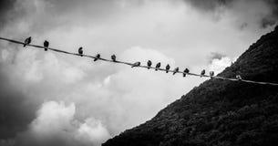 Grupo de pássaros em uma linha Fotos de Stock Royalty Free