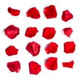 Grupo de pétalas cor-de-rosa vermelhas no branco Fotografia de Stock Royalty Free