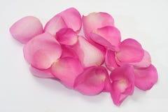 Grupo de pétalos color de rosa rosados en el fondo blanco Imagen de archivo libre de regalías