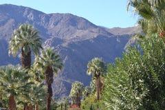 Grupo de palmas e de samambaias com fundo da montanha Fotografia de Stock Royalty Free
