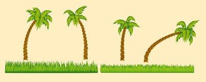 Grupo de palmeiras e de grama Imagens de Stock