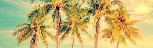 Grupo de palmeiras, panorama do verão do estilo do vintage, conceito do curso Fotos de Stock Royalty Free