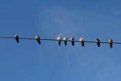 Grupo de palomas en línea eléctrica Fotos de archivo libres de regalías