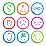 Grupo de partes do corpo do ser humano dos ícones Fotos de Stock Royalty Free