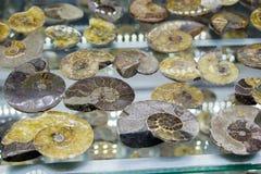 Grupo de pedras preciosas minerais naturais Imagem de Stock