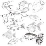 Grupo de peixes das ilustrações selvagem Oceano Imagem de Stock Royalty Free