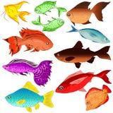 Grupo de peixes das ilustrações selvagem Oceano Fotografia de Stock Royalty Free