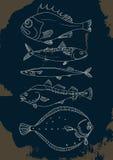 Grupo de peixes de mar garatuja do vetor Foto de Stock