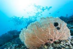 Grupo de peixes e de fã de mar Fotografia de Stock