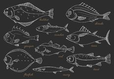 Grupo de peixes de mar Marisco Esboço do vetor Foto de Stock