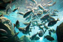 Grupo de peixes mim fotografia de stock