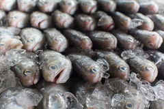 Grupo de peixes prontos à venda por atacado no mercado de peixes de Tailândia Fotografia de Stock