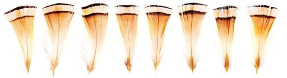 Grupo de penas de pássaro pequenas frágeis bonitas isoladas imagem de stock