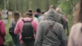 Grupo de PeopleWalking a través del bosque, turistas metrajes