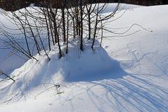 Grupo de pequeñas ramas pegarse hacia fuera de un pequeño banco de la nieve imágenes de archivo libres de regalías