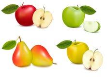 Grupo de peras e de maçãs. Vetor ilustração royalty free
