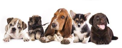 Grupo de perritos Fotos de archivo