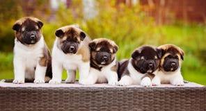 Grupo de perritos Imagen de archivo libre de regalías
