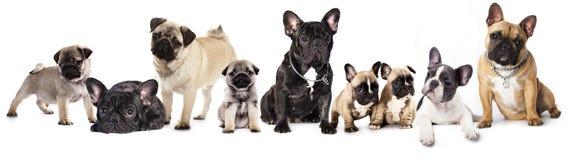 Grupo de perros Fotografía de archivo libre de regalías