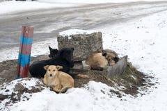 Grupo de perros perdidos Foto de archivo libre de regalías